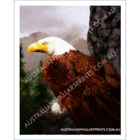 High Country Bald Eagle Art Print